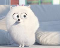 Animated Cute White Dog