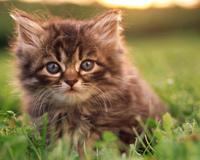 Sweet Kitty On Grass