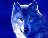 3D Fantasy Wolf