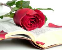 Bible Rose